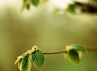 delicate-green-leaves