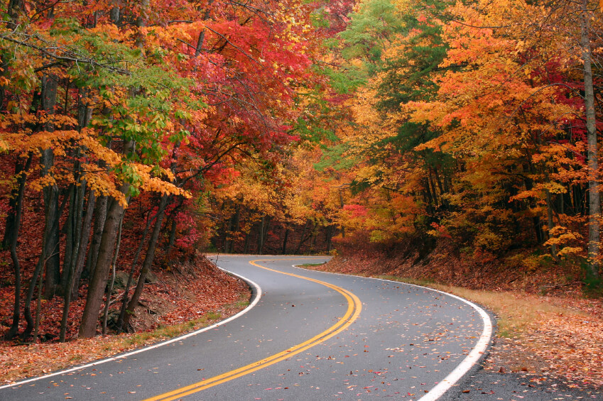 Take a road trip to see the leaves change color this fall.