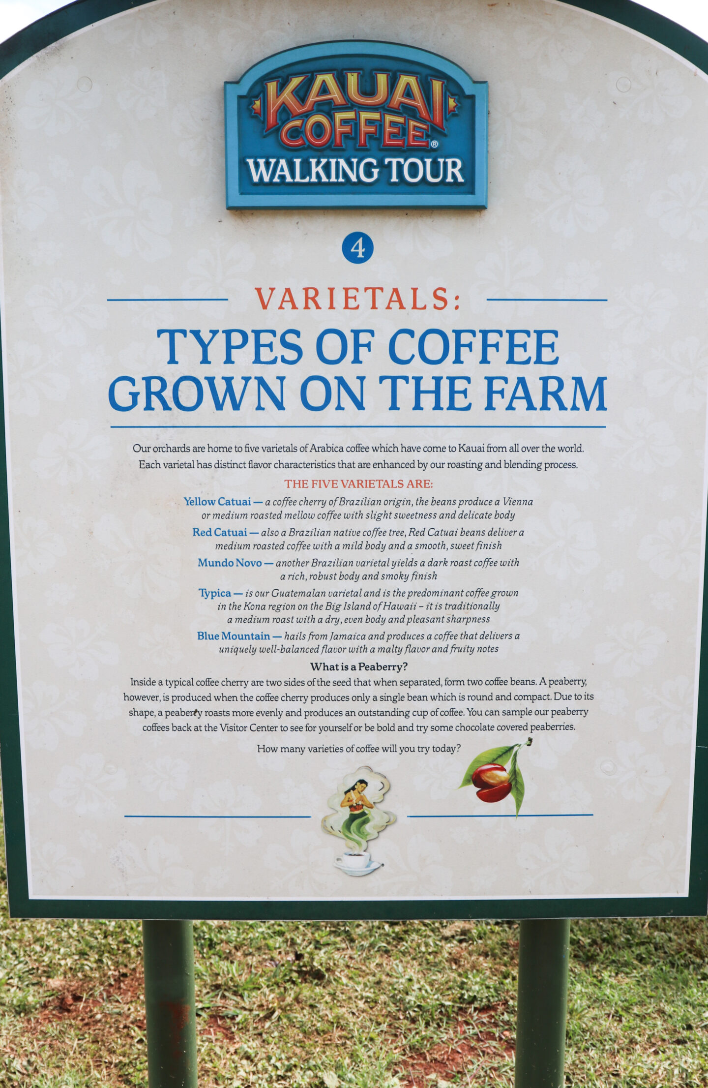 types of coffee grown on kauai farm