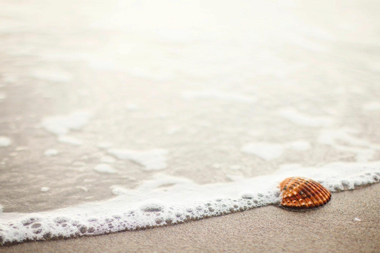 seashell at the shore