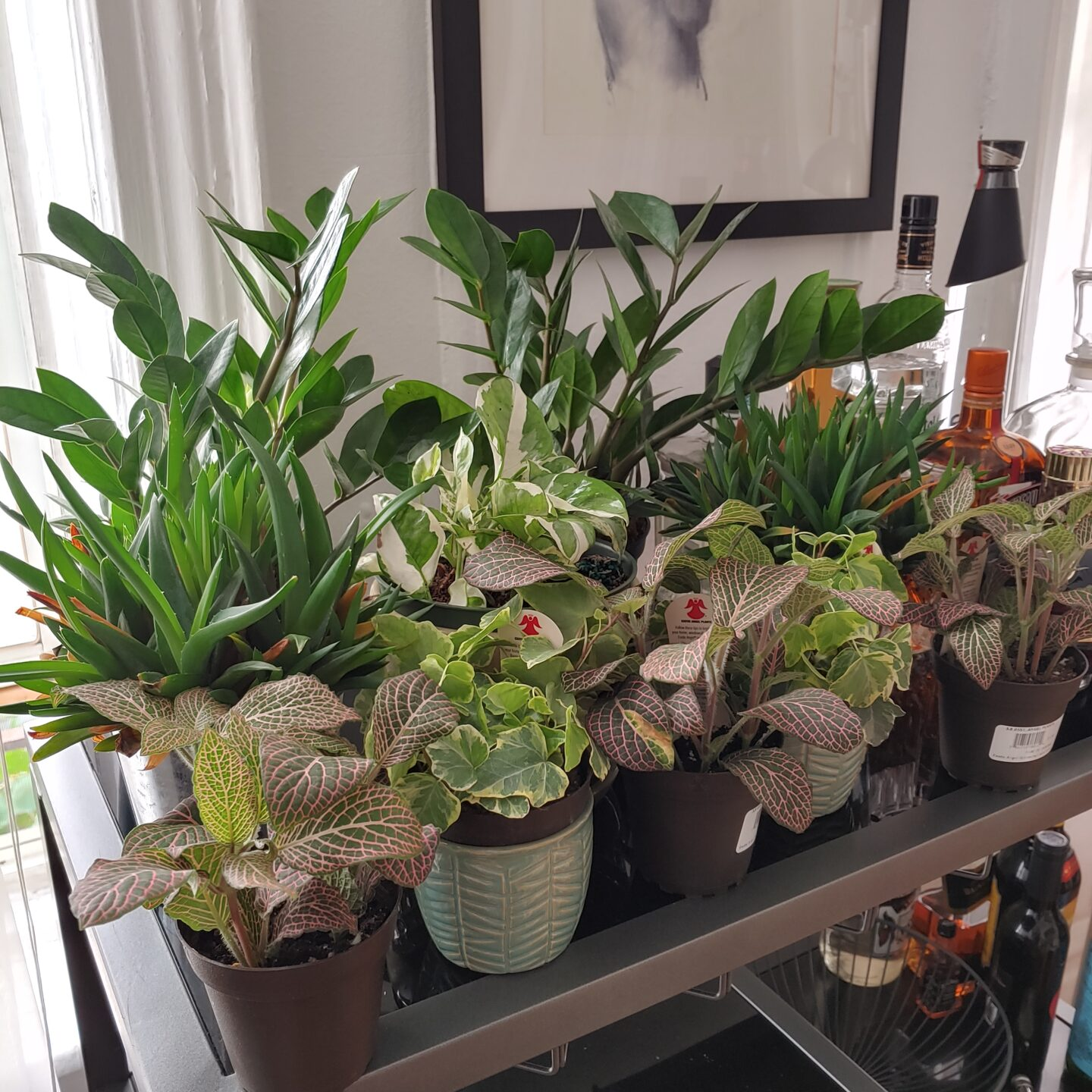 Birthing Babies: Becoming a Plant Mama In Quarantine