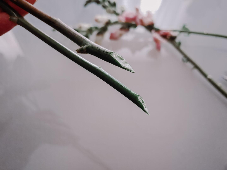 trimmed flower stems